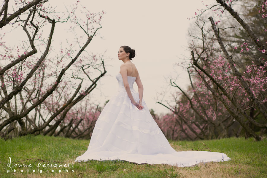 the dairy barn bridal photos