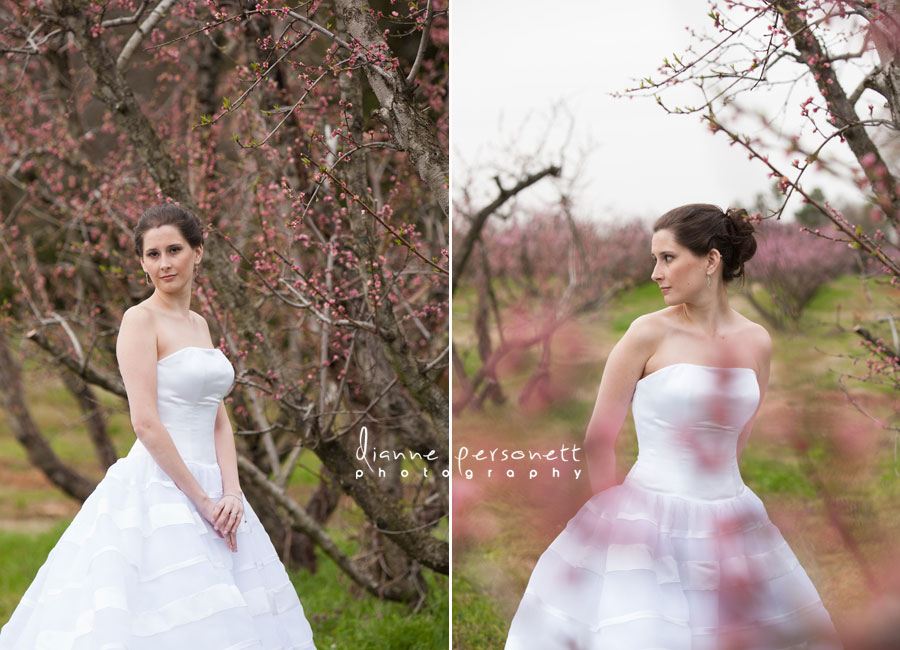 charlotte bridal session with blossoms